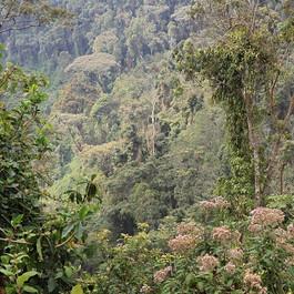 forêt-tropicale-daltitude-de-Nyungwe.jp
