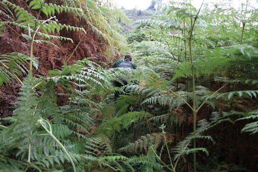Progression-dans-la-forêt.jpg