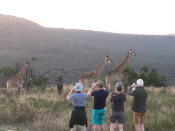 Giraffe Spotting on safari