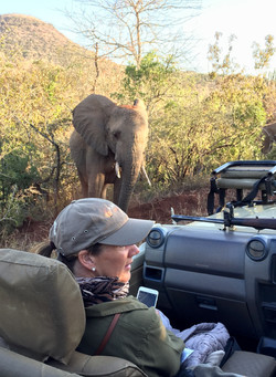Elephant spotting on safari