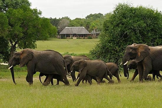Kruger Park elephants