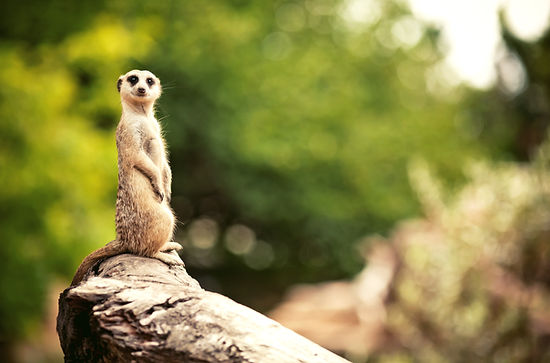 FAQs Meerkat