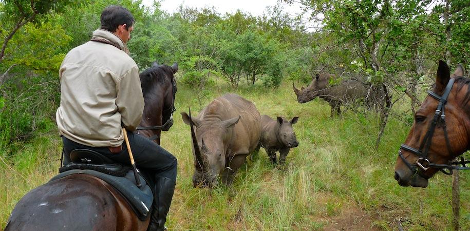 Up close with rhino
