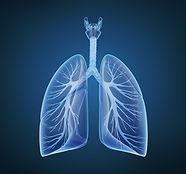 bigstock-Human-lungs-and-bronchi-in-x-r-