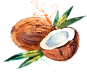 coconut-logo.png