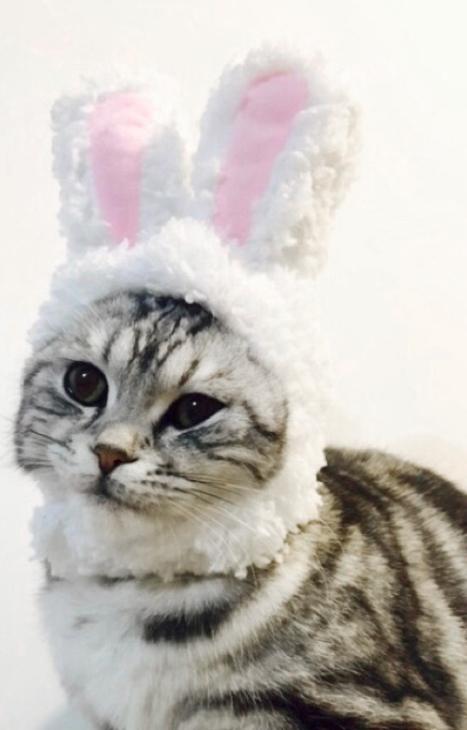 GGFLY CAT CUSTOM BUNNY HAT
