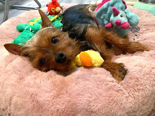 KONG Plush Duck Dog Toy