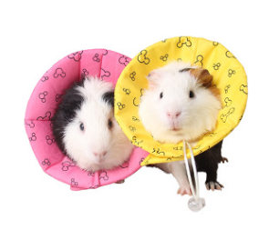 ELIZABATH CONE FOR HAMSTER AND ALL SMALL ANIMALS