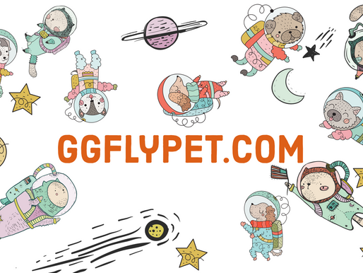 Why don't GGfly sell any 'pet food' yet?