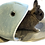 Thumbnail: SHARK HOUSE FOR RABBIT AND OTHER SMALLER PAW