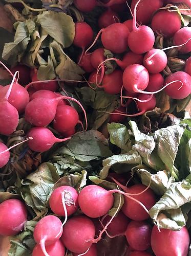 Organic Radishes Bunch