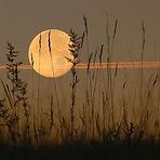 harvest-moon-plane2.jpg