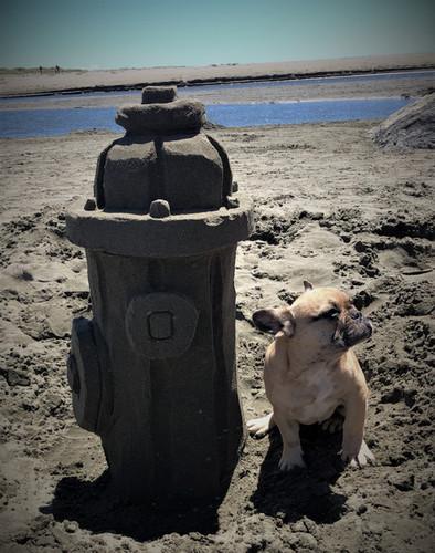 Sand Doodlers_Dog Days_3.jpg