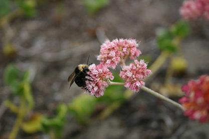 bumble bee ew.jpeg