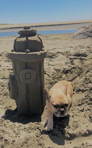 Sand Doodlers_Dog Days_1.jpg