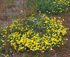 Lotus_corniculatus_habitat.jpg