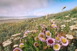 seaside_lanphere_edited