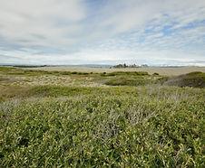 Salix_hookeriana_habitat.jpg