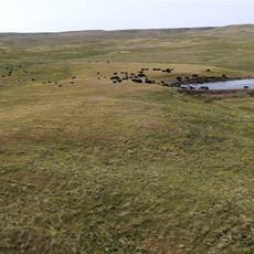 ranch4.jfif