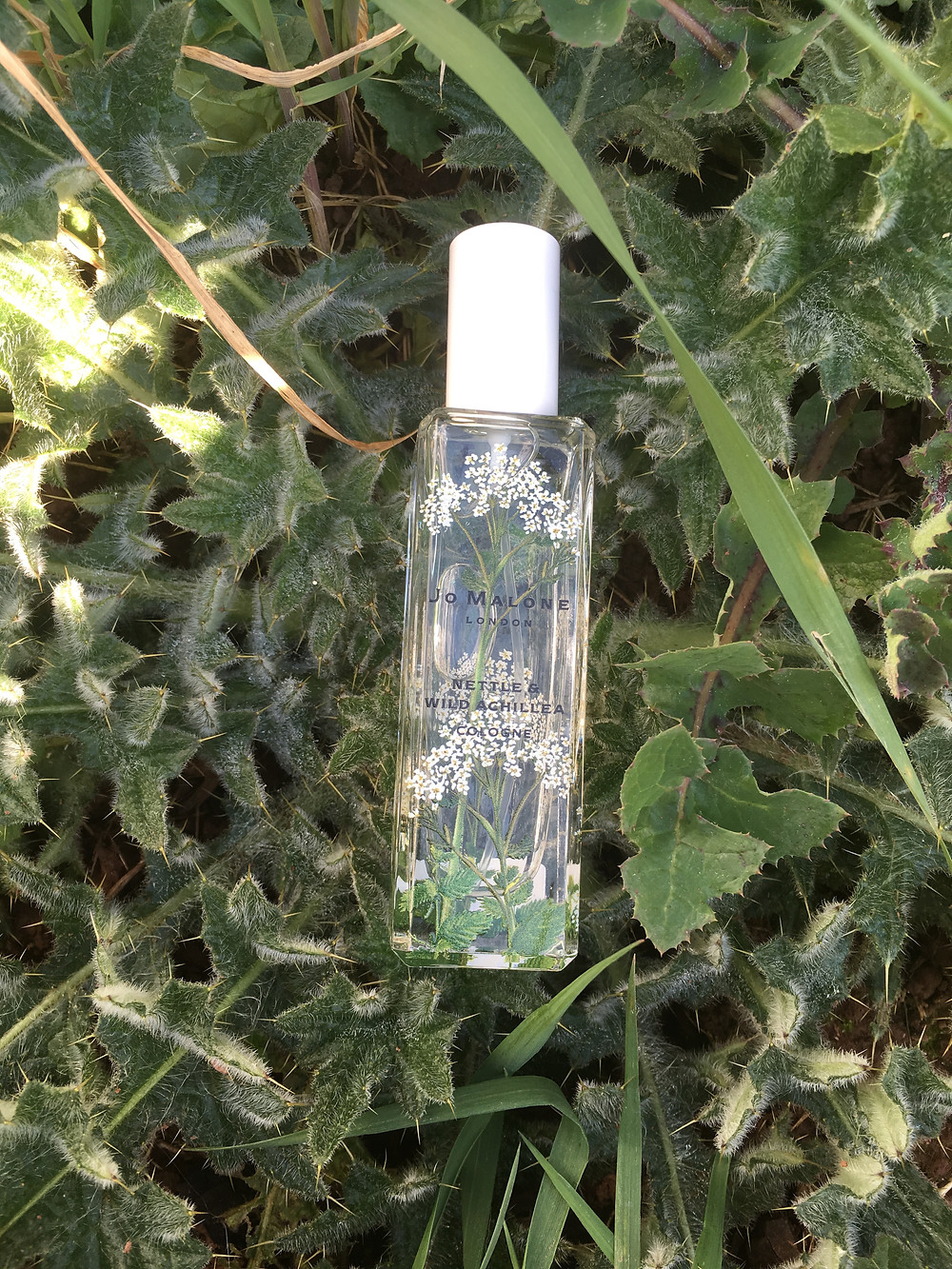 Nettle & Wild Achillea from Wild Flowers and Weeds