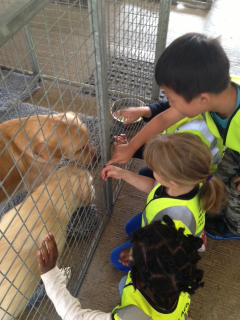 visit to guide dogs centre  chigwell 1