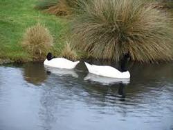 Wetland Centre, Barnes