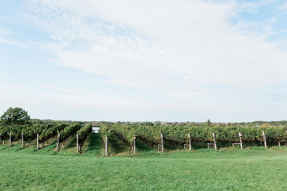 Ravine VIneyards Estate Winery