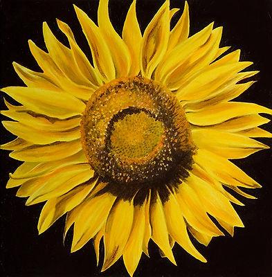 Sunflower+.jpg