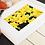 Thumbnail: Daffodils
