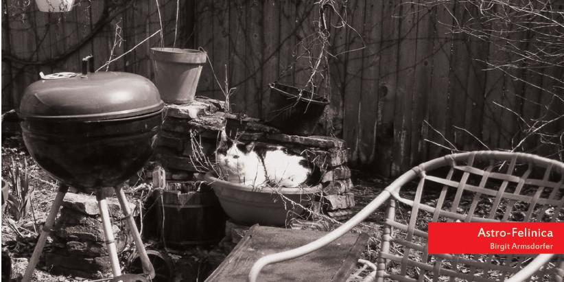 Secret Life of Houseplants