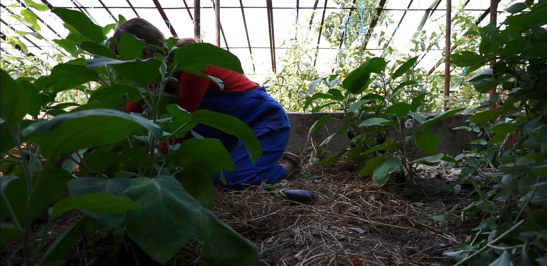 Letters to a Young Gardener, 2020