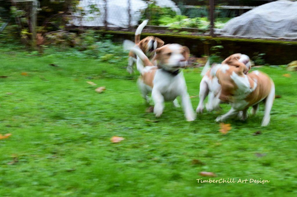 Beaglespaziergang 2017