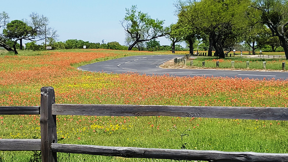 Red Wildflowers in Llano Park
