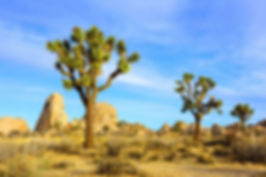Joshua-Tree-National-Park.jpg