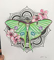 🌸Luna moth drawing with prismacolour pe