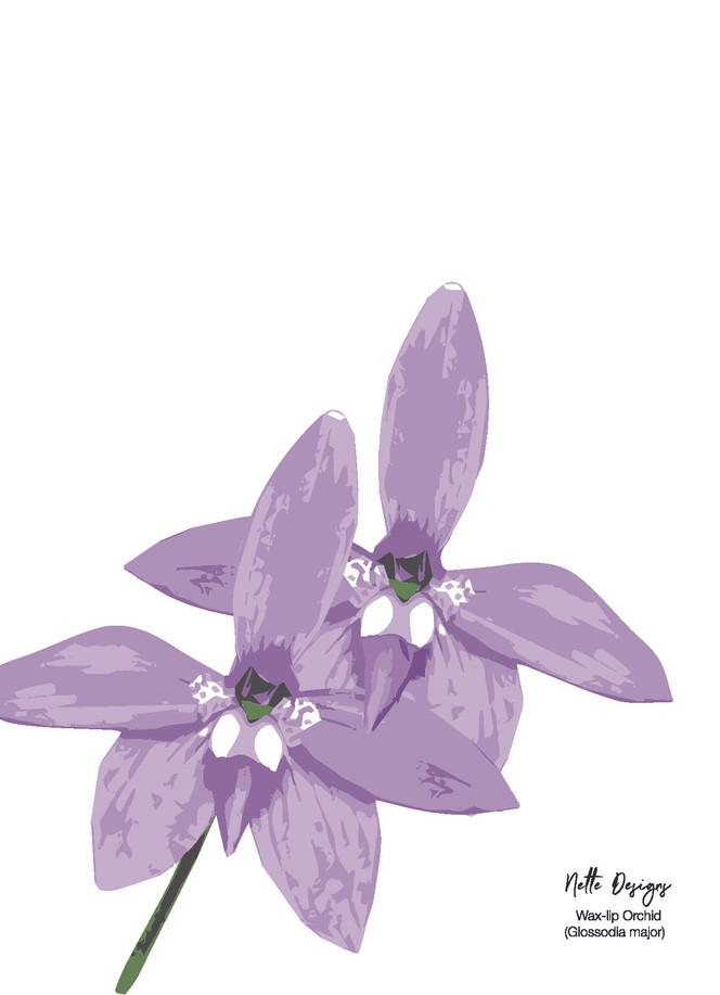 Wax-lip Orchid.jpg