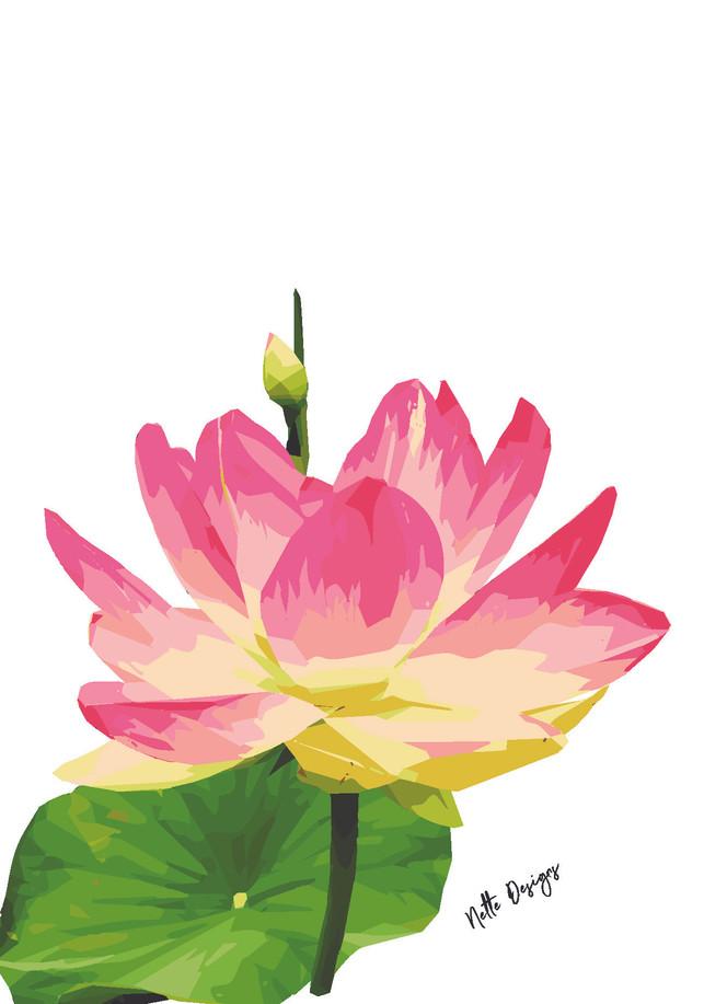 Lotus Pink.jpg