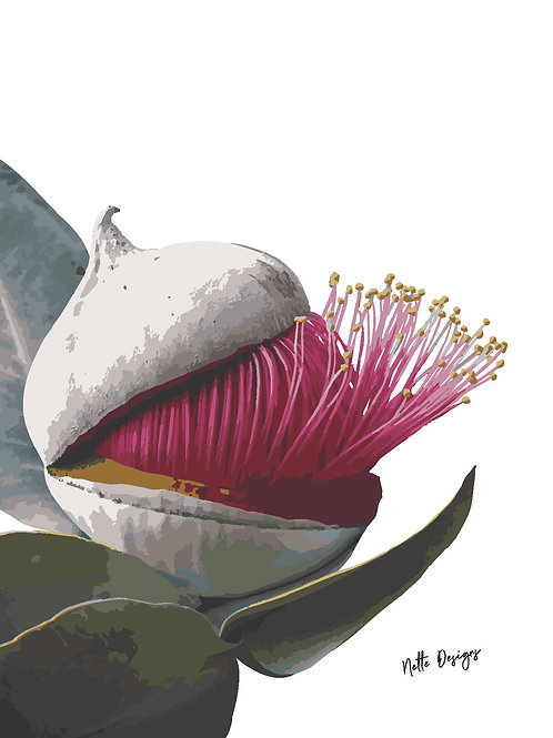 Mallee Rose Eucalyptus A6 Printed Card with gold envelope