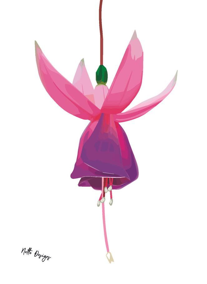 A6 Fuchsia Fairy.jpg