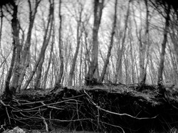 Roots+©+spina