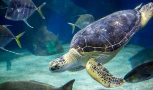 06_Virginia Beach Aquarium_Visit award w