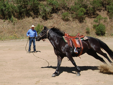 Lunging Your Horse, and Why It's Important