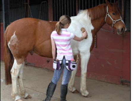 Grooming Your Horse, and Why It's Important