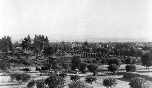 apricot orchard Hollywood Cahuenga 1900.
