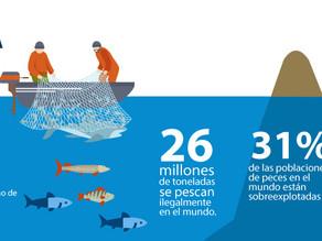 La Pesca Ilegal en cifras