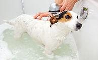 dog bath.jpg