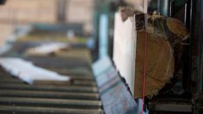 La voracidad de China convierte la madera en un bien de lujo