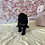 Thumbnail: Shih Poo #187 Female