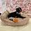 Thumbnail: French Bulldog Female #483