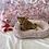 Thumbnail: Shiba Inu #576 Female
